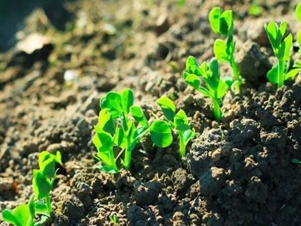 土壤生物修复法