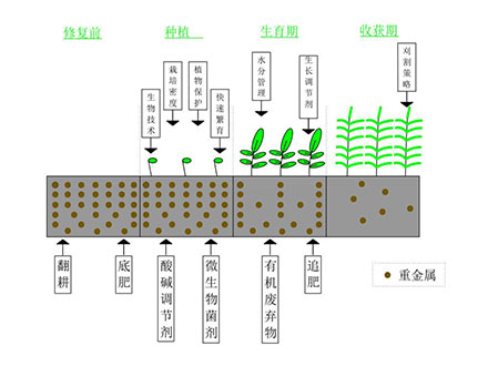 植物修复技术