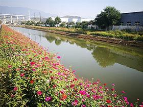 河道黑臭水体处理技术